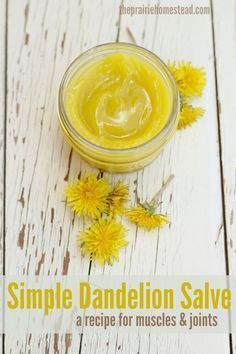 Simple Dandelion Salve: a recipe for muscles and Joints