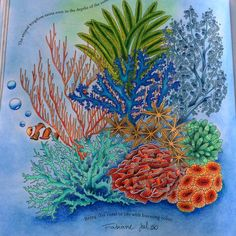 my ocean on book by #milliemarotta #inspirational #coloring #colouring #reinoanimalolivro