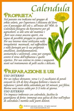 Il Calendario dell'Orto Aromatic Herbs, Medicinal Plants, Calendula, Natural Life, Natural Health, Tree Of Life Meaning, Magic Herbs, Plants Are Friends, Wellness Fitness