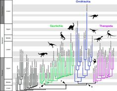 A new hypothesis of dinosaur relationships and early dinosaur evolution Cosmos, Phd Student, Dinosaur Fossils, Prehistoric Animals, Science News, Dark Matter, Computer Programming, History Museum, T Rex