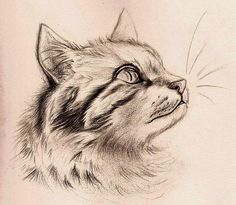 Fun with Detail - Cat by Mitch-el on DeviantArt