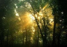 Burnridge Forest Preserve