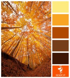 Dead Forest: Yellow, Orange, Brown, Sand, Stone - Colour Inspiration Pallet