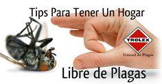 Tips Para Tener El Hogar Libre de Plagas - Trolex