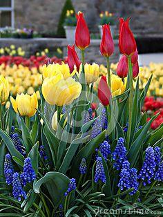 Spring Flowers in a Botanical Garden