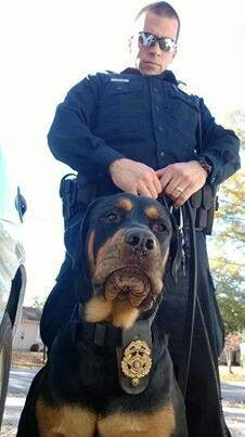 """""""You gotta problem with authority or something??""""   K9 Diesel"""