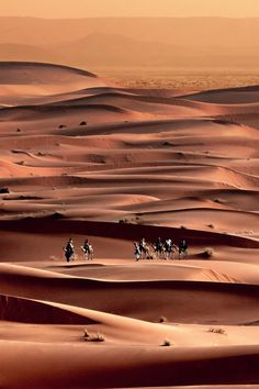 Western Sahara, Africa. Took camels through the Sahara. Slept in black tents. 2005-2006