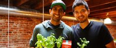 Fun with Fungi: Food Business is Still Mushrooming for Two Berkeley Grads | California Magazine