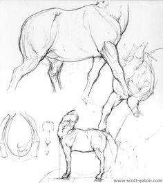 Centaur Sketches Gallery » Scott Eaton Studios