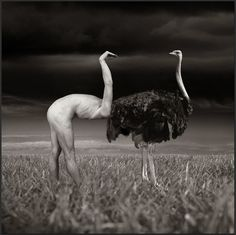 Photo Manipulations the Old Fashioned Way by Thomas Barbey