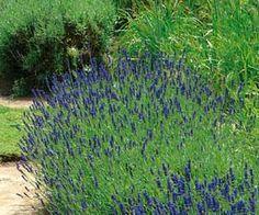 Vivaces en plein soleil sur pinterest plantes vivaces for Plante pour bordure plein soleil