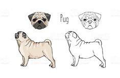 Simple Dog Care Advice For A Happier, Healthier Dog – Info About The Dog Chinese Pug, Pug Tattoo, Emergency Vet, Pug Art, Pug Puppies, Animal Sketches, Losing A Dog, Pug Love, Shelter Dogs