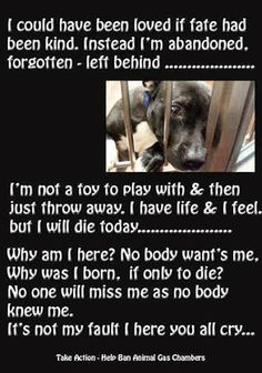 SPAY/NEUTER YOUR PETS and always be an advocate for fostering and rescuing and NEVER buying your pets!! There are so many pets that die everyday waiting for you, why would you buy???