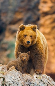 This beautiful pare of brown bears mother and cub. These animals are truly great spending there waking hours eating as much as they can to prepare for the winter hibernation my ideal life style