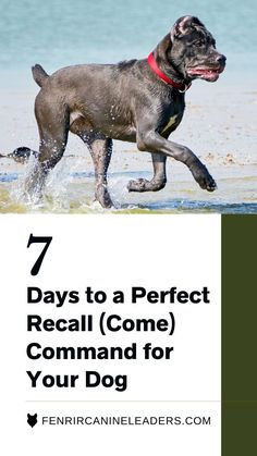 Welcome to our easy to follow, 7-day program to help you build the foundations of recall through games, intensifying throughout the week to reach the desired outcome of a dog who returns every time…