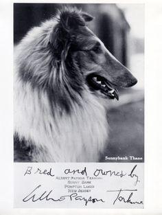 Postcard photo of Thane signed by Albert Payson Terhune.  Photo courtesy of Marilyn R. Horowitz, Terhune Sunnybank Memorial