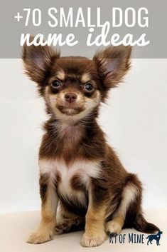 A list of Small Dog Names to use for finding the perfect name for your puppy! READ Fun Game of Thrones Dog Names and Brief Backstories Male Dog Names Unique, Unusual Dog Names, Small Dog Names, Little Dog Names, Best Small Dogs, Cute Small Dogs, Girl Puppy Names Unique, Different Dog Names, Puppies Names Female