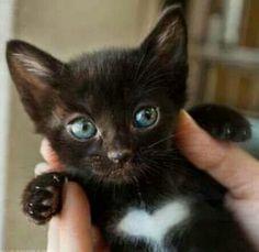 "I ""heart"" this kitten:)"