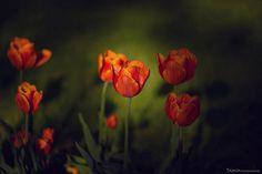 Rose Facebook, Landscape, Rose, Flowers, Plants, Scenery, Pink, Plant, Roses