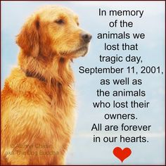 In memory of the animals we lost that tragic day 9-11-01 as well as the animals who lost their owners.  All are forever in our hearts.