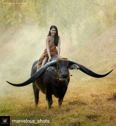 water buffalo with a beautiful girl