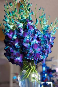 Blue Dendrobium Orchids blue flowers bouquet, we had hundreds of these at our wedding 😍 Deco Floral, Arte Floral, Blue Dendrobium Orchids, Purple Orchids, Teal Flowers, Teal Wedding Flowers, Wedding Colors, Buy Flowers, Exotic Flowers