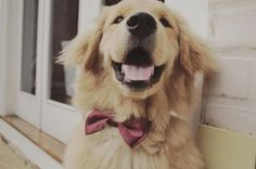 dogs in bow ties are always a good idea