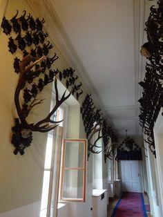 Salzkammergut, Bad Ischl, Kaiservilla, corridor with antlers Breaking Bad, Corridor, Antlers, Austria, Hunting, Chandelier, Ceiling Lights, Mirror, Wall