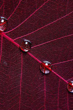 iphone wallpaper ipad parallax | red-leaf-inc | download at freeios7.com