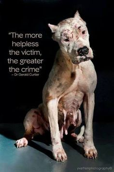"I will never understand you get the mindset that says ""This is ok""  It breaks my heart that we are such cruel people!   Bully Breed Bodyguard - FB"
