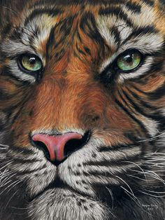 Tiger Drawing Framed Art Print by nalikaylee Realistic Animal Drawings, Abstract Drawings, Pencil Art Drawings, Colorful Drawings, Tiger Artwork, Tiger Painting, Lion Sketch, Tiger Sketch, Kreative Portraits