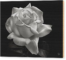 Perfect Rose In Black And White Wood Print by Endre Balogh