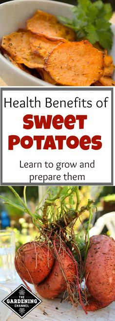 Health benefits of Sweet Potatoes. Sweet potatoes are so versatile and nutritious. Try planting some in your garden and see how easy they are to grow.