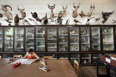 nature lab risd | Student at work in the RISD Nature Lab © Josephine Sittenfeld