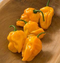 Hot Pepper Habanero Numex Suave Orange D3024A (Yellow Orange) 25 Organic Seeds By David's Garden Seeds David's Garden Seeds http://www.amazon.com/dp/B00IU2FB18/ref=cm_sw_r_pi_dp_o81lub0FZ4GXZ