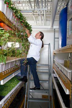 #Aquaponic farming at our Arlington, VA headquarters.