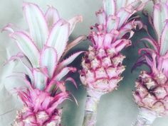 Pink pineapples were approved by the FDA for public consumption, taking millennial pink to entirely new levels that can enter your cocktails. Cocktails, Drinks, Taste Buds, Pineapple, Public, Canning, Fruit, Luxury, Rose