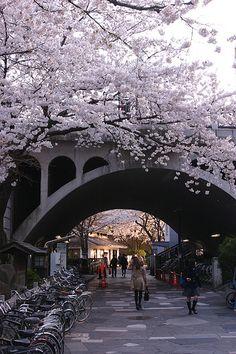 Aesthetic Japan, Japanese Aesthetic, Blossom Trees, Cherry Blossoms, Japan Street, Pet Clinic, Pink Trees, City Wallpaper, Japan Travel