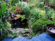 Would love to have small garden pond with a rounded blue, raised deck & tons of leafy plants surrounding it.