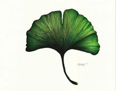 Ginkgo Leaf Art Print by Art by Gemmles - X-Small Watercolor Projects, Watercolor Paintings, Ginko Tree, Gingko Leaf, Blatt Tattoos, Leaf Prints, Art Prints, Pattern Texture, Natur Tattoos