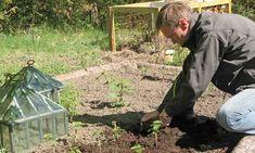 Många trädgårdsbuskar kan enkelt bli flera med sticklingar tagna på vintern. Gardening Tips, Plants, Villa, Gardens, Plant, Villas, Tuin, Planting, House Gardens