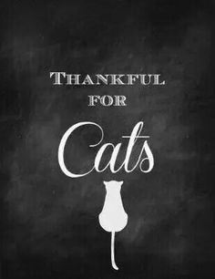 Truth I Love Cats, Crazy Cats, Cat Signs, Cat Lady, Art Pictures, Quotations, Thankful, My Love, Words