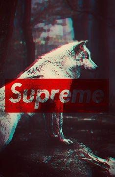 #Wallpaper #Wolf Wolf • Supreme