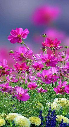 Слика Good Morning Beautiful Flowers, Beautiful Flowers Images, Beautiful Nature Pictures, Beautiful Flowers Garden, Flower Images, Flower Pictures, Flowers For You, Love Flowers, Framed Wallpaper