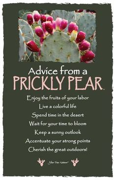 Advice from a Prickly Pear - Frameable Art Card – Your True Nature, Inc. Word Of Advice, Advice Quotes, Life Advice, Good Advice, Quotes Quotes, Hawaiian Quotes, Fruit Quotes, Mental Health Journal, Meant To Be Quotes