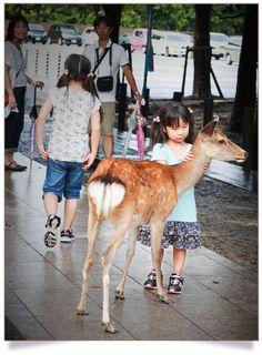Un daim avec une petite japonaise
