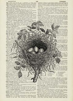 Bird nest on book pages