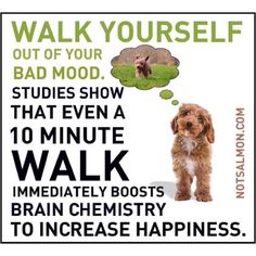 Take a walk with your dog!