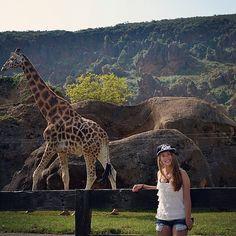 Ñiiiiii que guapa <3 #Cabarceno#girafa