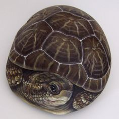 Tortoise, paint on stone by Roberto Rizzo